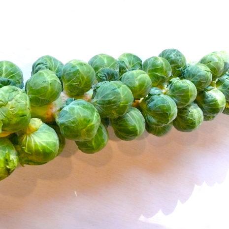 sprout-stalk.jpg